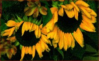 http://www.allenlieberman.com/files/gimgs/th-16_SUNFLOWERS-web_v2.jpg