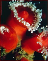 http://www.allenlieberman.com/files/gimgs/th-6_ANEMONES_v2.jpg